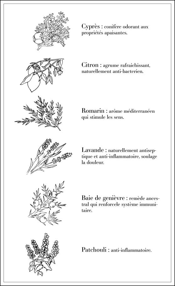 Détails des plantes